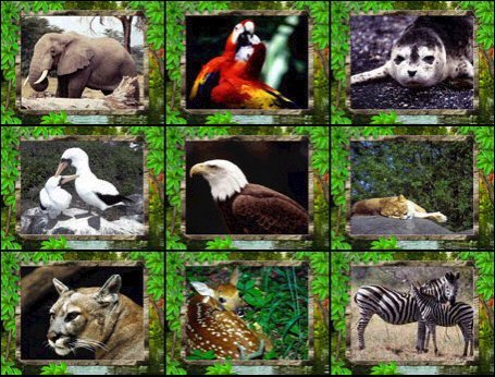 Large screenshot for Wild Animals Living Screensaver.